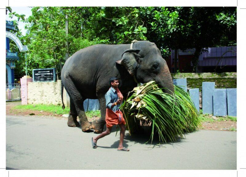 17-11-01 Seite 46-Elefant