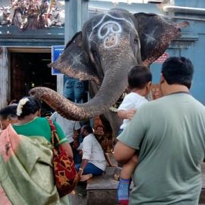 Lakshmi, der Tempelelefant am Manakula Vinayagar. Foto: Mat McDermatt