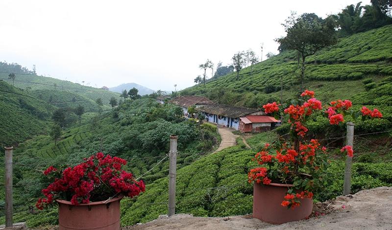 Kerala Basis Sternreise