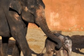 Farina und ihr Baby.