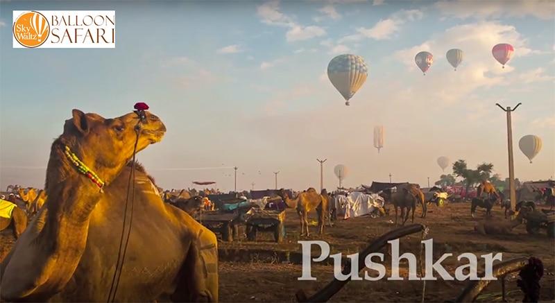 Als ob 30.000 Kamele nicht schon attraktiv genug wären; nun gibt es auch ein Heißluftballon-Festival. Foto: SkyWaltz