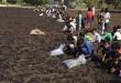 Die Kinder suchen in dem verbrannten Feld nach noch verwertbaren Resten. Foto: IndienHilfe