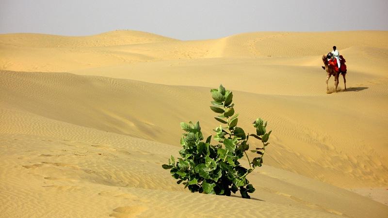 Die Wüste in Rajasthan. Foto: Amre