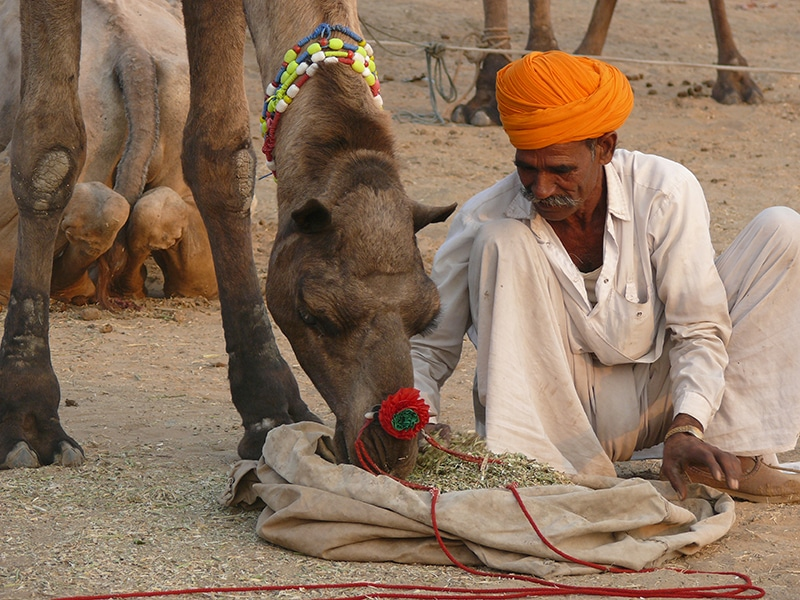 Kamelbesitzer auf der Pushkar Camel Fair