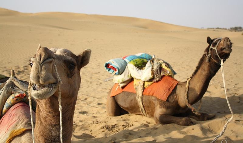 Mit dem Kamel durch die Wüste Thar (Rajasthan). Foto: Dan Searle
