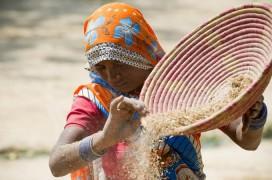 Vieles, wie hier bei der Linsenernte, ist in der Landwirtschaft in Indien noch Handarbeit. Foto: Gates Foundation