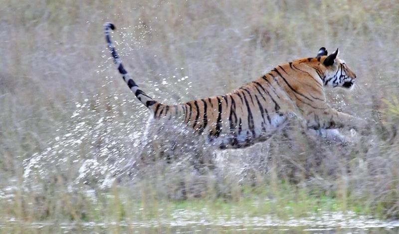 Nationale Tourismuspreise - Madhya Pradesh u. a. für die Naturerlebnisse