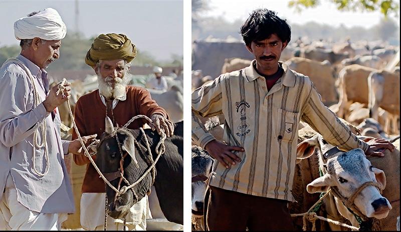 Viehhändler auf der Nagaur Cattle Fair