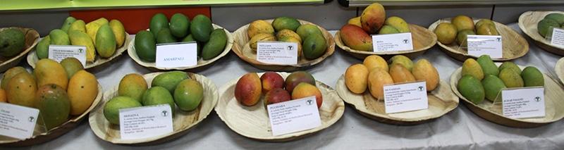 Mangos in Indien