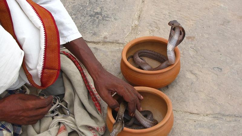 Jhapan Mela - Fest der Schlangen