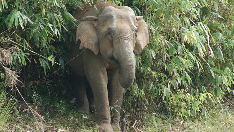 Wilder Elefant im Periyar Nationalpark. Foto: Marco Heutink