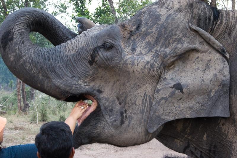 Gott Ganesha zu Ehren werden die Elefanten gefüttert. Foto: Pete Favelle