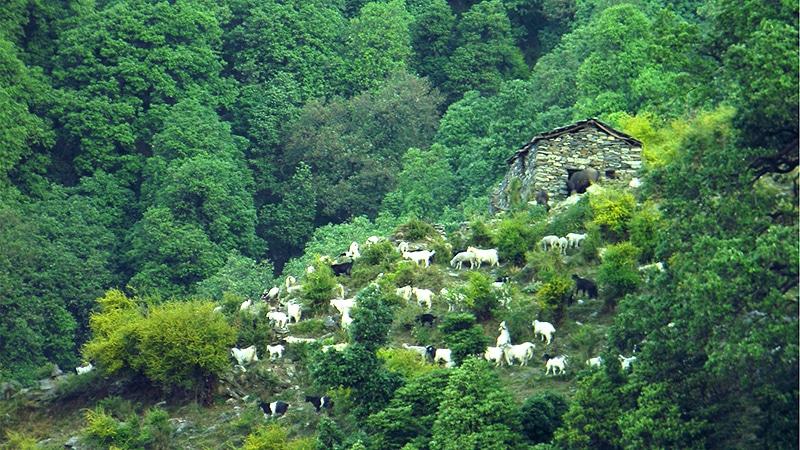 In den Bergen von Palampur
