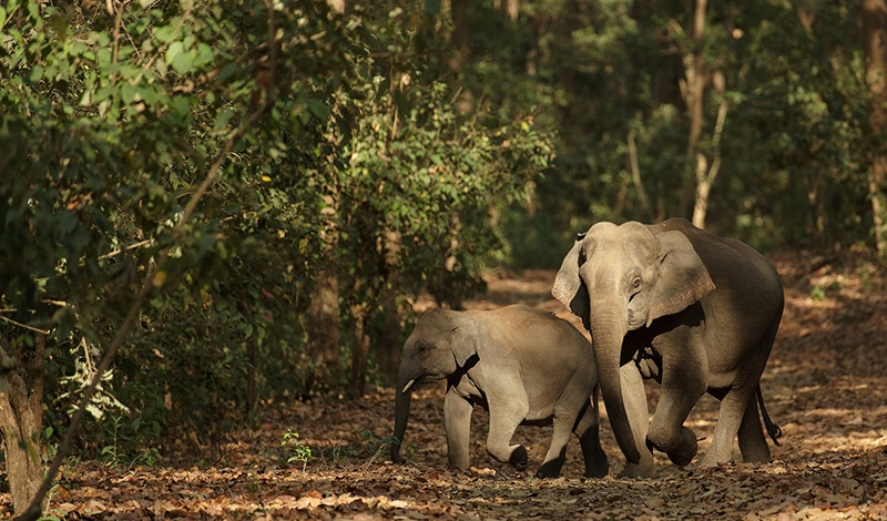 Elefanten im Jim Corbett Nationalpark. Foto: Rohit Varma