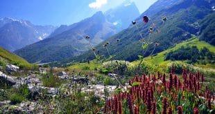 Im Tal der Blumen - in dieser traumhaften Naturkulisse geht man doch gern Wandern. Foto: Sandeep