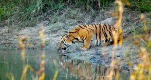 Jetzt mit dem Zug zu den Tigerschutzgebieten Indiens. Foto: Sumeet Moghe
