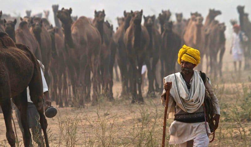 Feste und Festivals in Indien im November