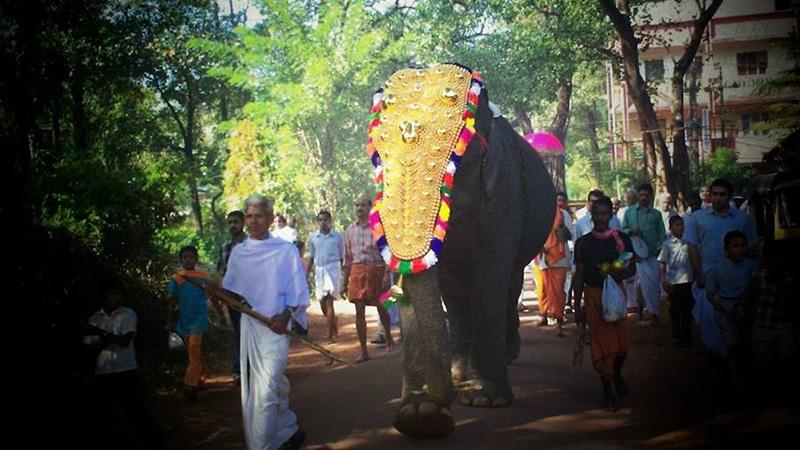 Festlich geschmückter Elefant. Foto: Vivek Raj