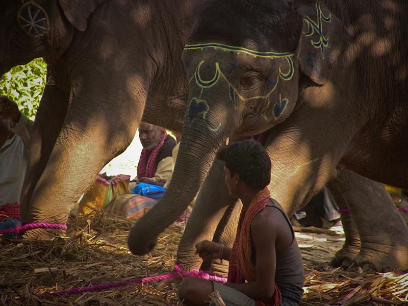 Das Besondere an der Sonepur Fair sind die vielen Elefanten. Foto: azotesdivinos