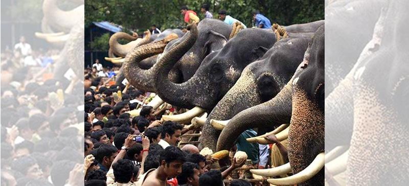 Fest des Elefantenfütterns