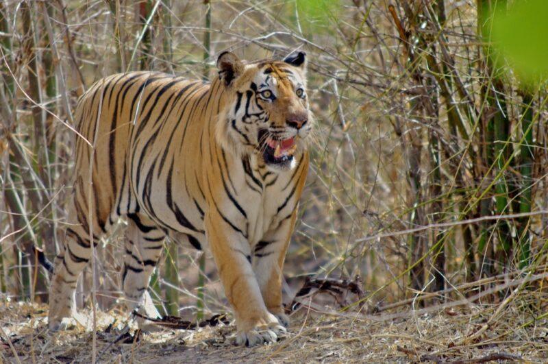 Herausragende indische Nationalparks und ihre Hauptattraktionen