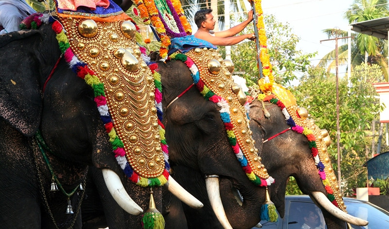 So schön geschmückt führt man die Elefanten zum Festival. Foto: mati mate