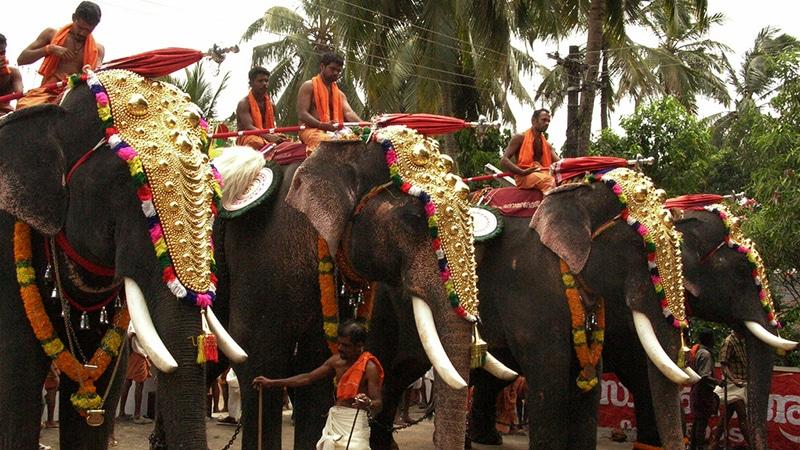 Bei nahezu jedem Tempelfest in Kerala sieht man auch reich geschmückte Elefanten. Foto: spisharam