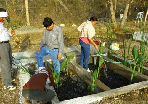 Die ersten Pflanzen der Kläranlage werden gepflanzt. Foto: DIZ/Ecumenical Sangam