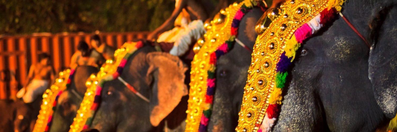 Geschmückte Elefanten beim Tempelfest Thrissur Pooram. Foto: Karthik Ramachandran