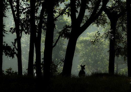 Der Wald im Kanha Nationalpark. Foto: Neelima V.