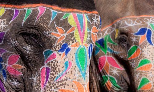 Bei Festivals in Kerala sieht man im Januar, Februar, März sehr viele geschmückte und bemalte Elefanten. Foto: Riccardo Romano