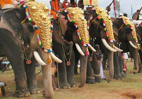 Geschmückte Elefanten bei einem der Tempelfeste in Kerala. Foto: Dhyangji