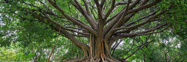 Lebensbaum