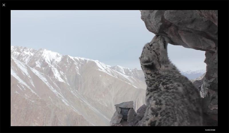 Schneeleopard Bildschirmfoto Google Earth