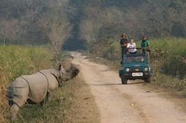 Safari im Kaziranga Nationalpark. © Foto: reisefieber